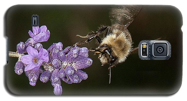 Bee Landing On Lavender Galaxy S5 Case