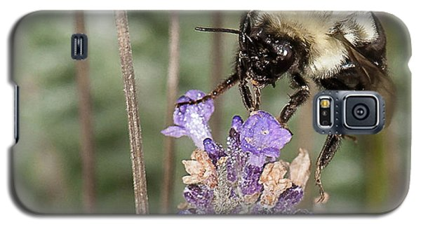 Bee Lands On Lavender Galaxy S5 Case