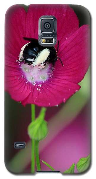 Bee My Guest Galaxy S5 Case by Elizabeth Sullivan