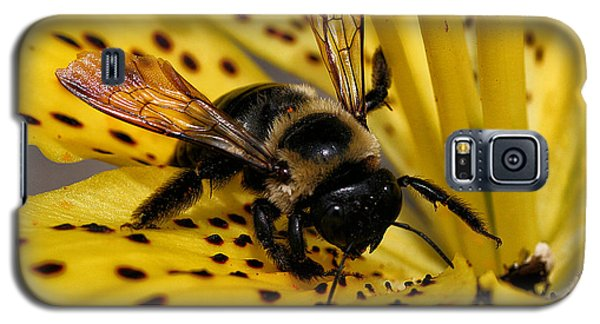 Bee On A Lily Galaxy S5 Case