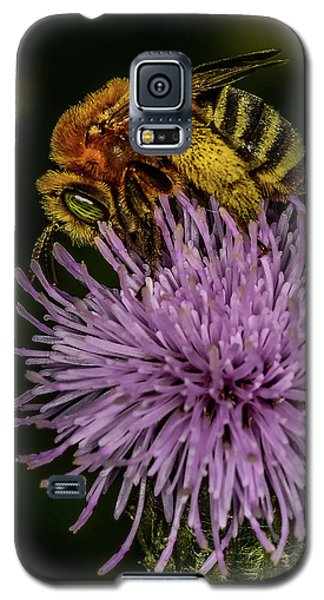 Galaxy S5 Case featuring the photograph Bee On A Thistle by Paul Freidlund