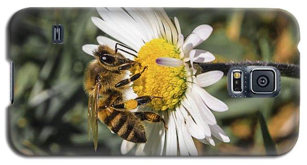 Bee On Flower Daisy Galaxy S5 Case