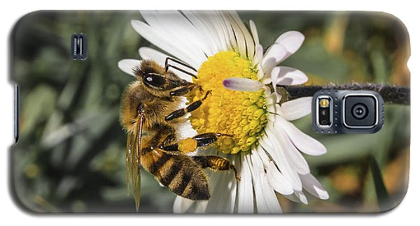 Bee On Flower Daisy Galaxy S5 Case