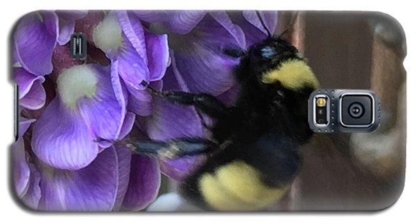 Bee On Native Wisteria I Galaxy S5 Case by Angela Annas