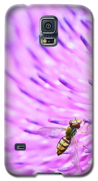Sweat Bee On Thistle Galaxy S5 Case