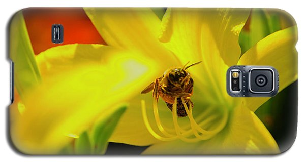 Bee On Yellow Lilly Galaxy S5 Case