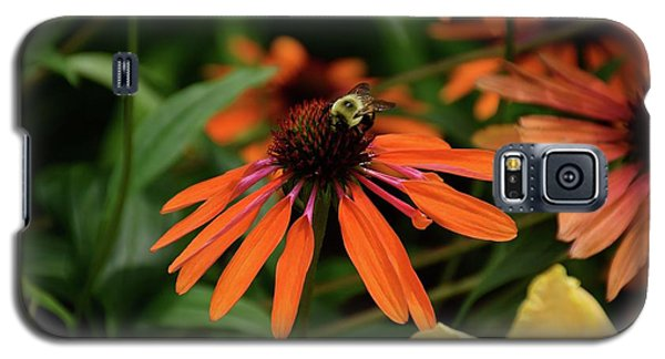 Bee Pollinating On A Cone Flower Galaxy S5 Case