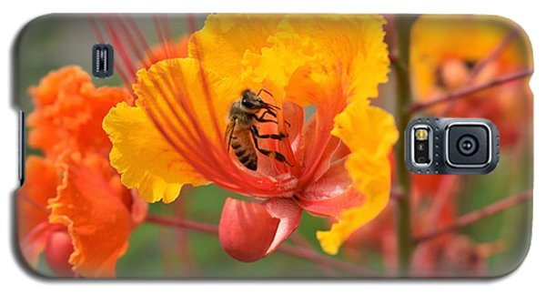 Bee Pollinating Bird Of Paradise Galaxy S5 Case