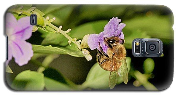 Bee Taking Pollen Galaxy S5 Case