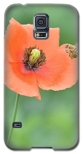 Bee To Poppy Galaxy S5 Case by Alan Lenk