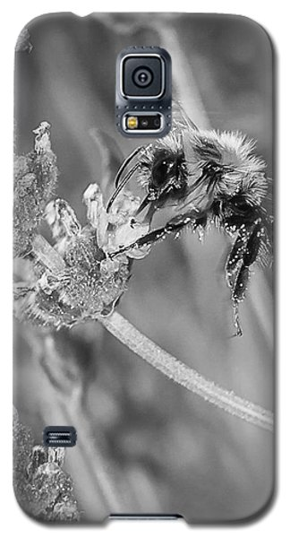 Bee Works Lavender Galaxy S5 Case