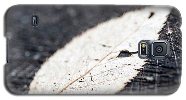 Beech And Stump Galaxy S5 Case