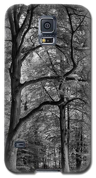 Beech Forest - 365-222 Galaxy S5 Case by Inge Riis McDonald