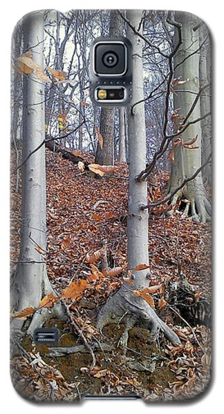 Beech Trees Galaxy S5 Case