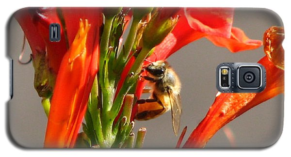 Day In A Life Of A Bee Galaxy S5 Case