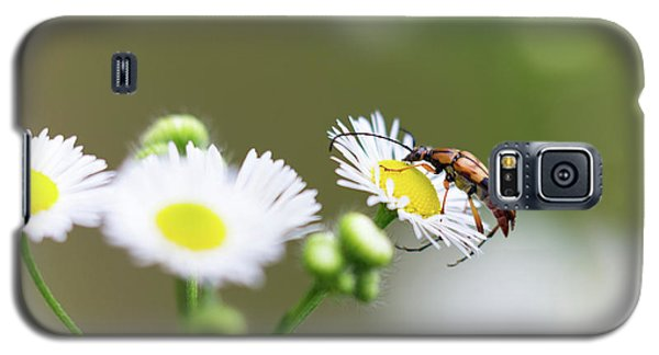 Beetle Daisy Galaxy S5 Case