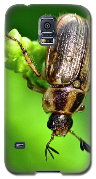 Beetle Galaxy S5 Case
