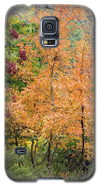 Galaxy S5 Case featuring the photograph Before The Fall by Deborah  Crew-Johnson