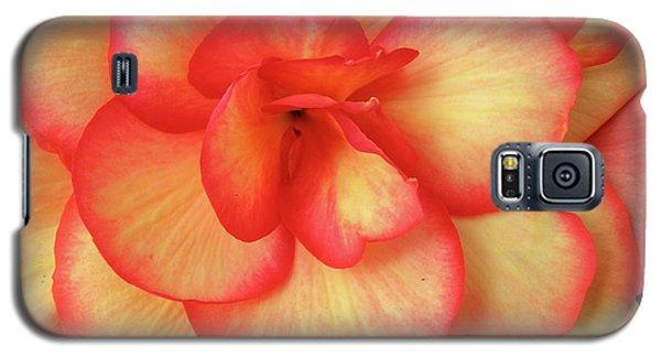 Begonia No. 1 Galaxy S5 Case