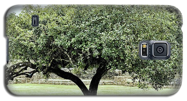 Galaxy S5 Case featuring the photograph Belize Tree by Linda Constant