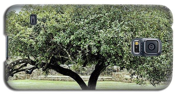 Belize Tree Galaxy S5 Case