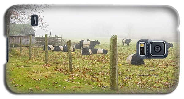 Belted Galloway Cows Farm Rockport Maine Photograph Galaxy S5 Case by Keith Webber Jr
