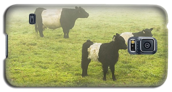 Belted Galloway Cows Grazing  In Foggy Farm Field Maine Galaxy S5 Case by Keith Webber Jr