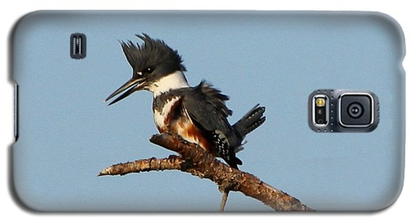 Galaxy S5 Case featuring the photograph Belted Kingfisher  by Barbara Bowen