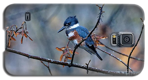 Belted Kingfisher Perch Galaxy S5 Case