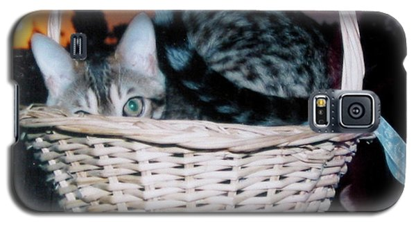 Galaxy S5 Case featuring the photograph Bengal Cat At Sunset by Phyllis Kaltenbach