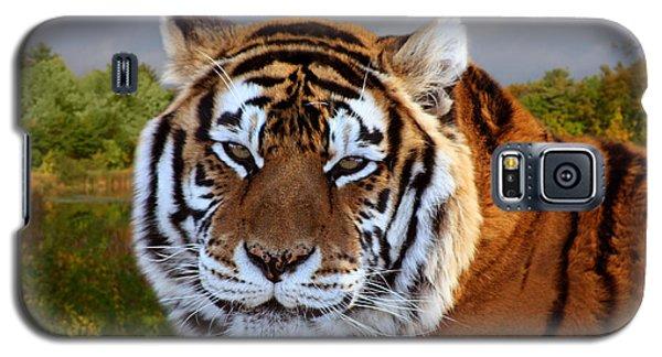Bengal Tiger Portrait Galaxy S5 Case