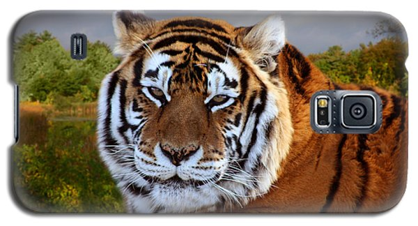 Bengal Tiger Portrait Galaxy S5 Case