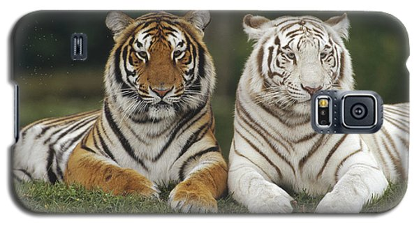 Bengal Tiger Team Galaxy S5 Case