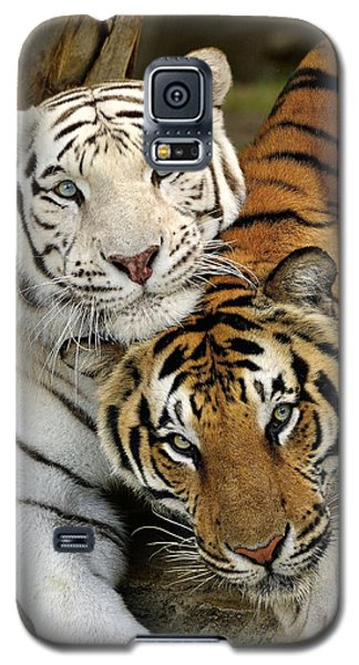 Bengal Tigers At Play Galaxy S5 Case