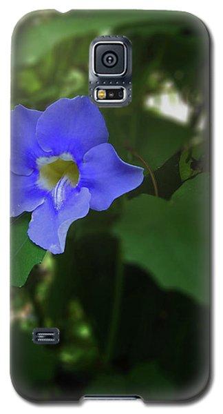 Bengal Trumpet Flower Blue Tones Galaxy S5 Case