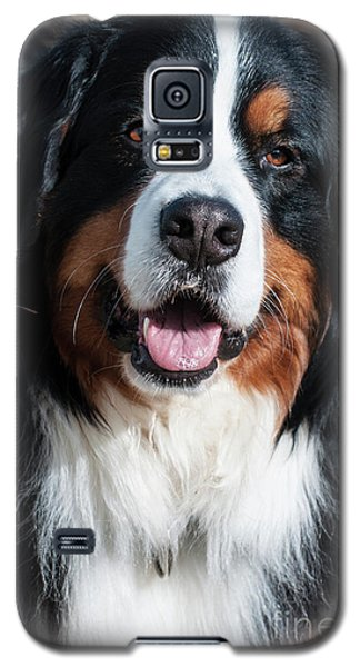 Galaxy S5 Case featuring the photograph Bernese Mountain Dog Portrait  by Gary Whitton