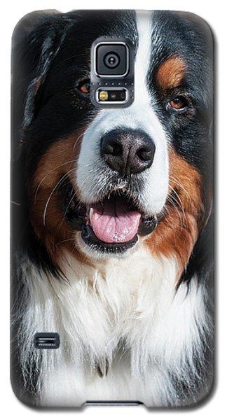 Bernese Mountain Dog Portrait  Galaxy S5 Case