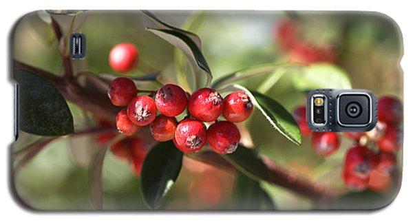 Berry Delight Galaxy S5 Case