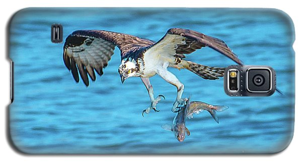 Best Osprey With Fish In One Talon Galaxy S5 Case by Jeff at JSJ Photography