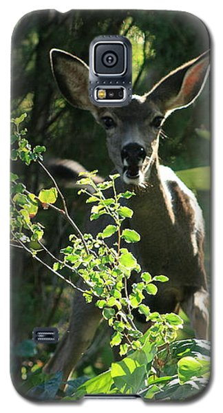 Galaxy S5 Case featuring the photograph Beverly Hills Deer by Marna Edwards Flavell