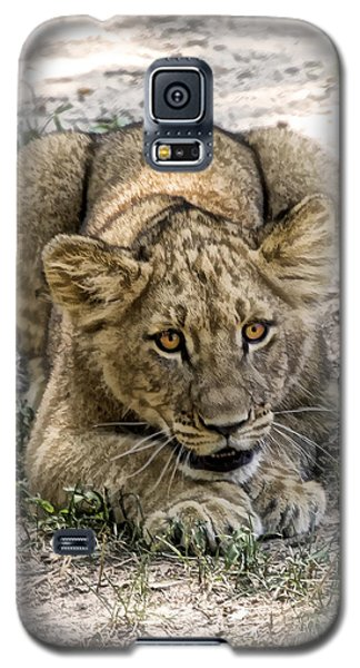 Galaxy S5 Case featuring the photograph Beware by Cheri McEachin