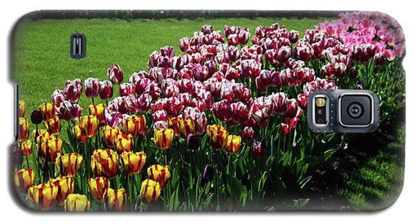 Multicolor Tulips Galaxy S5 Case