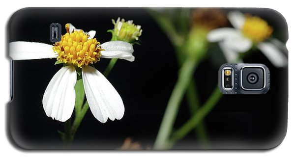 Galaxy S5 Case featuring the photograph Bidens Alba by Richard Rizzo