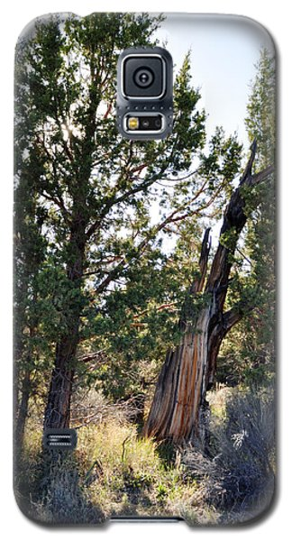 Galaxy S5 Case featuring the photograph Big Bear Forest by Kyle Hanson