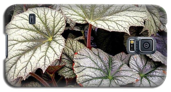 Big Begonia Leaves Galaxy S5 Case