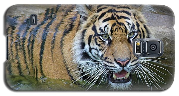 Galaxy S5 Case featuring the photograph Big Cat by Elizabeth Budd