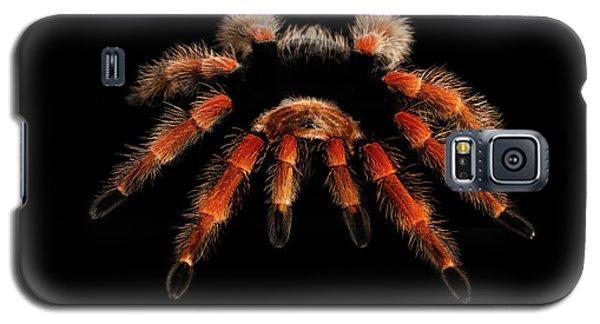 Big Hairy Tarantula Theraphosidae Isolated On Black Background Galaxy S5 Case