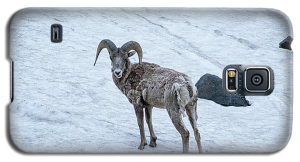 Big Horn Sheep  Galaxy S5 Case