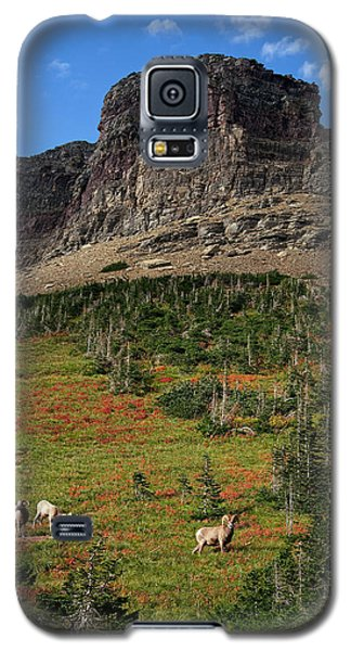 Big Horn Sheep Galaxy S5 Case