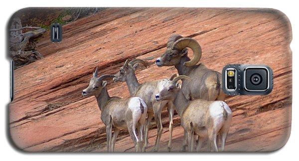 Big Horn Sheep, Zion National Park Galaxy S5 Case